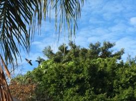 Voando pelos céus de Perth