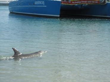 Monkey Mia e os golfinhos