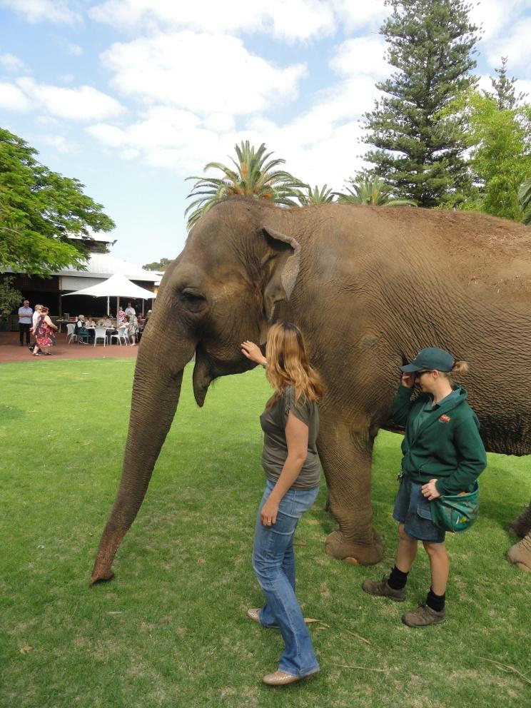 Tricia, elefante